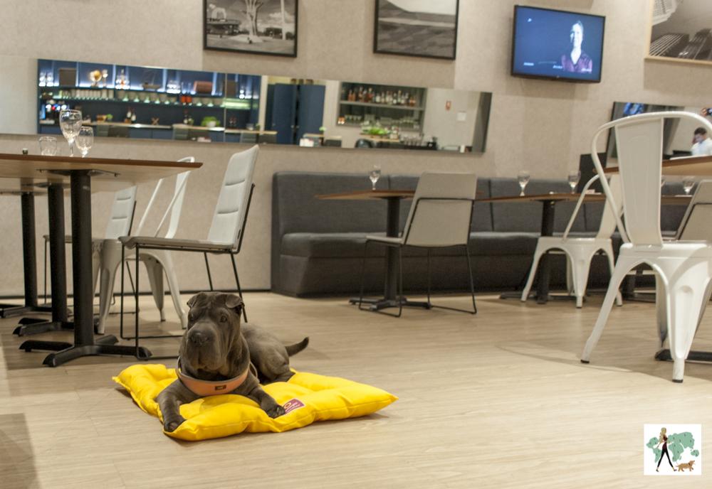 cachorro deitado no salão de restaurante