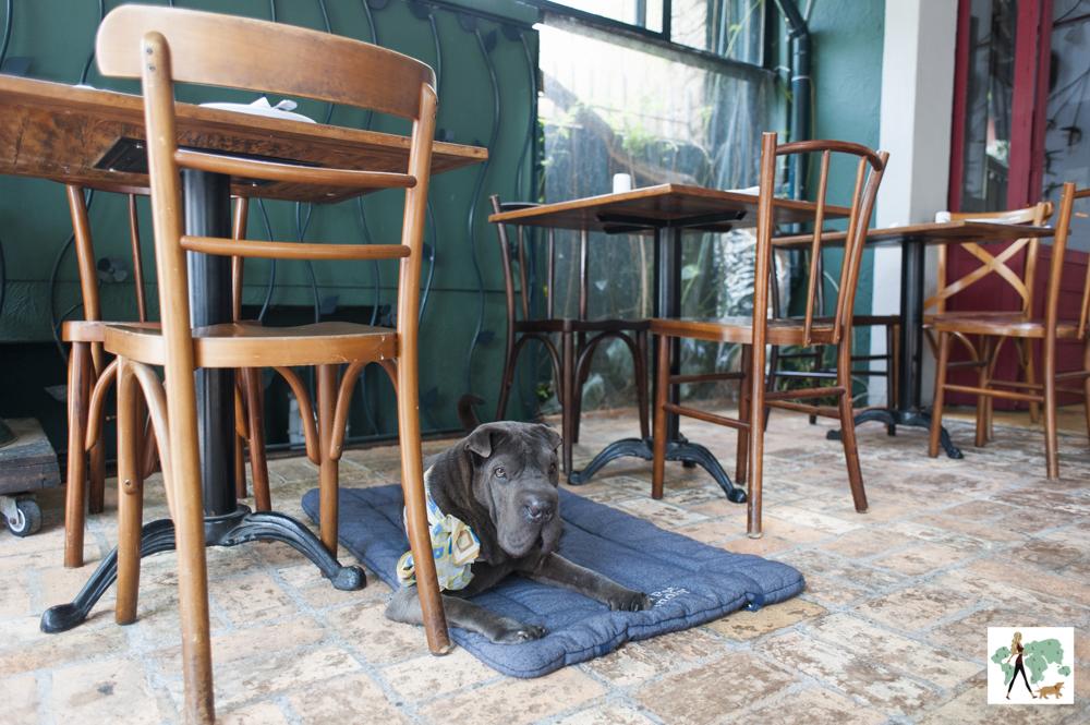 cachorro deitado ao lado de mesa em restaurante