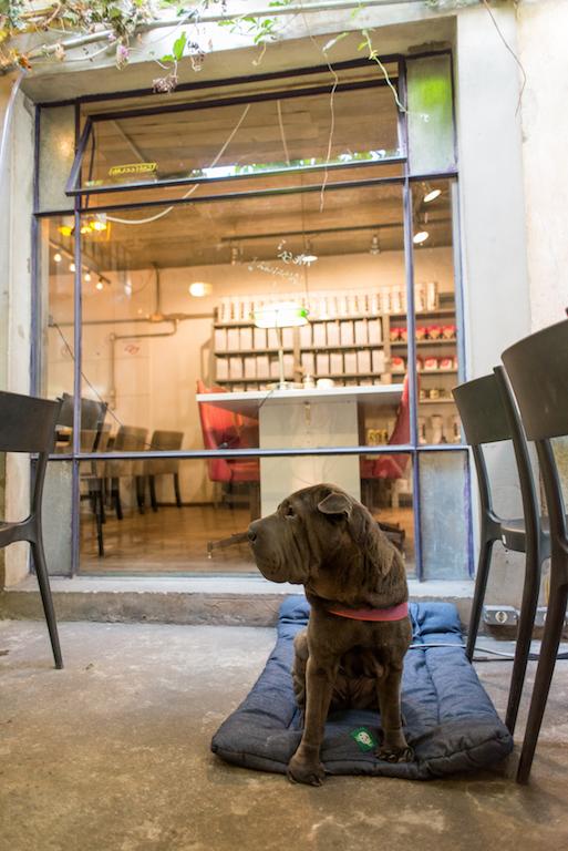 cachorro sentado em café