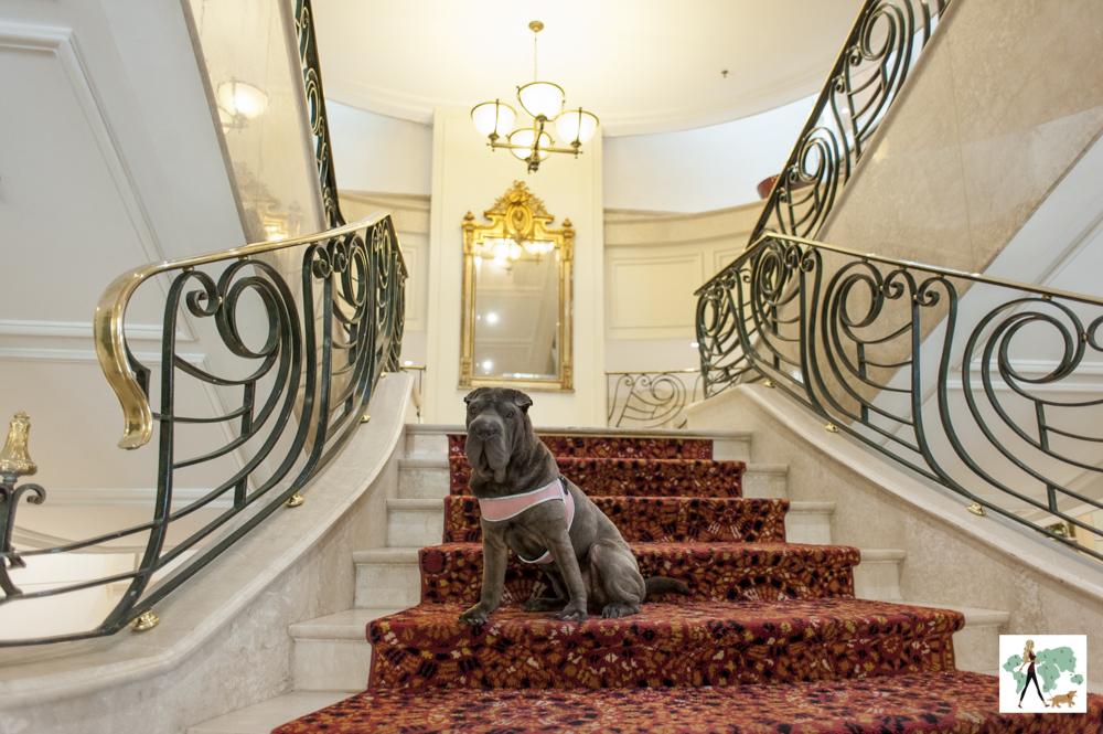 cachorro sentado em escadaria de hotel de luxo