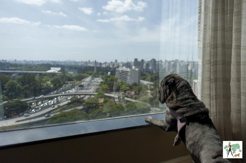 cachorro olhando pela janela com vista para a avenida 23 de Maio e parque Ibirapuera