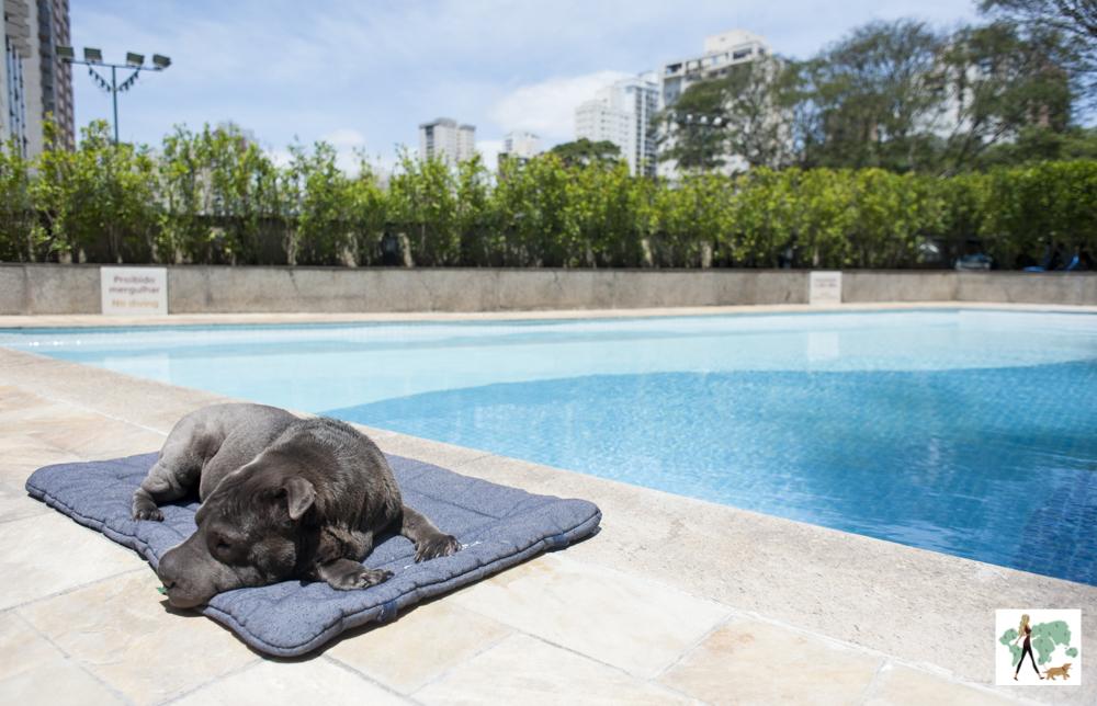 cachorro deitado em cima de almofada ao lado de piscina