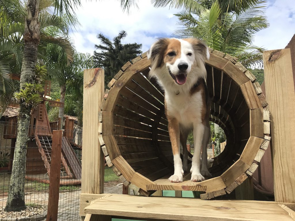 cachorro em playground de pousada pet friendly