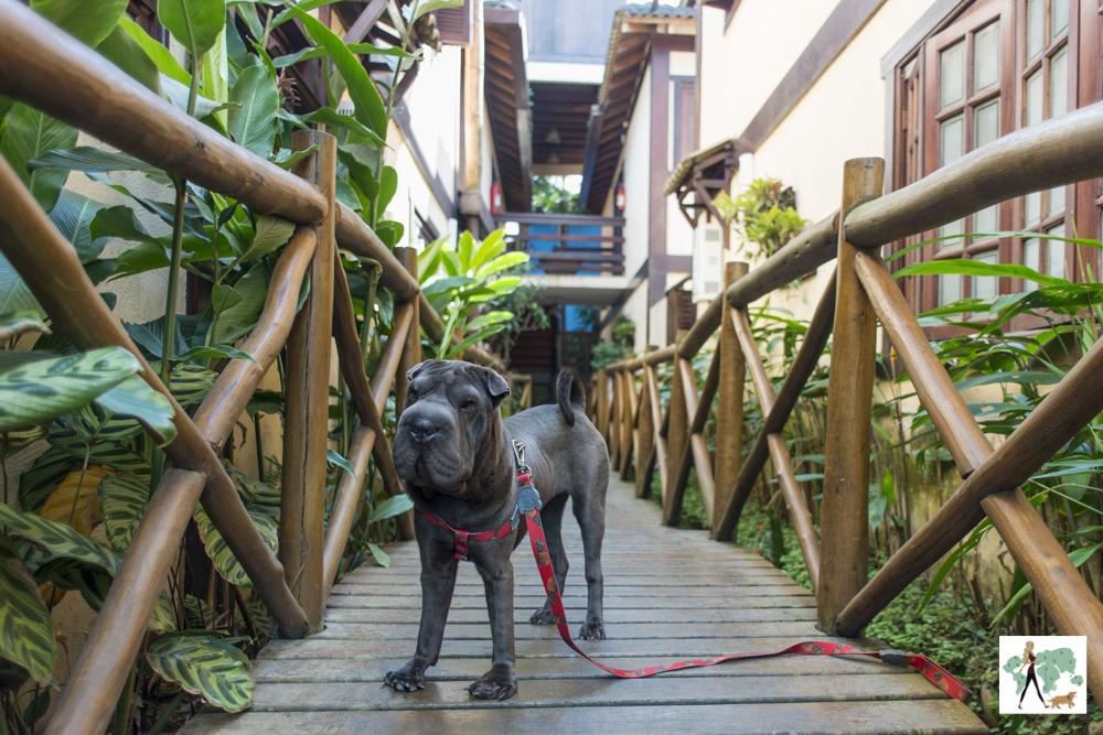cachorro em ponte de madeira