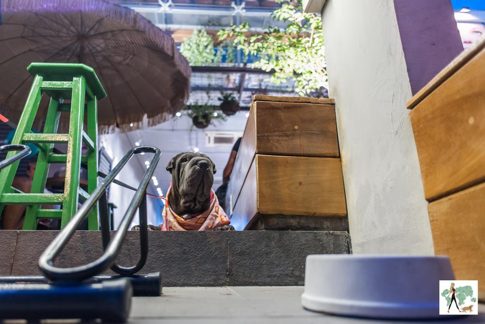 cachorro em sorveteria e pote de água