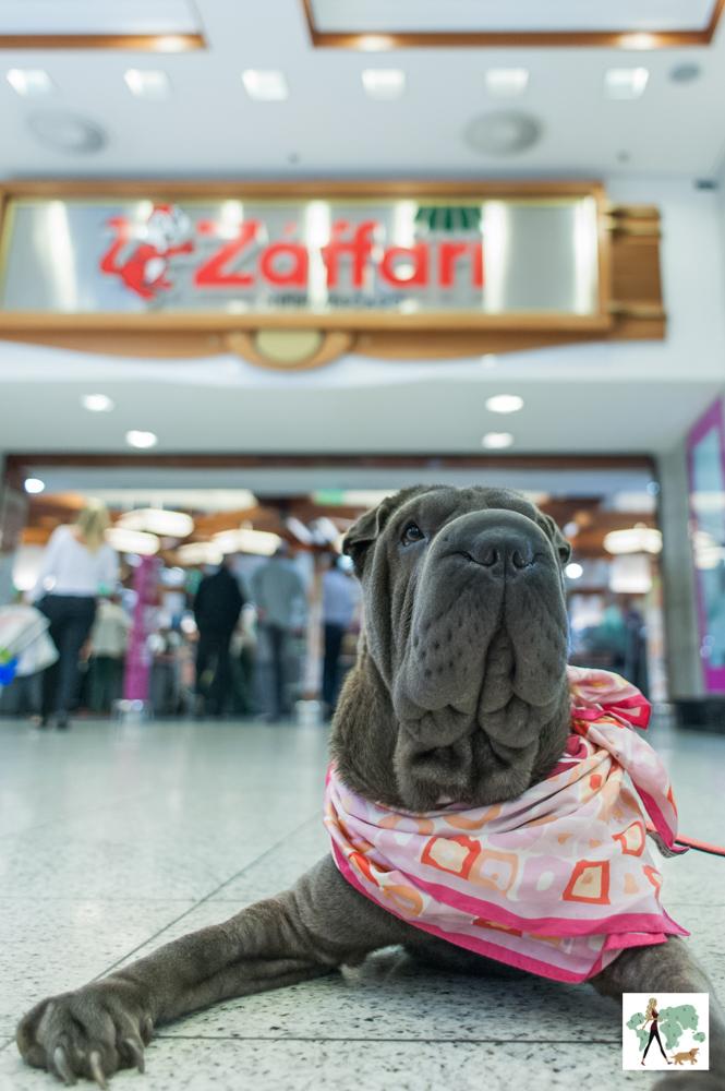 cachorro deitado no chão na frente do supermercado Zaffari
