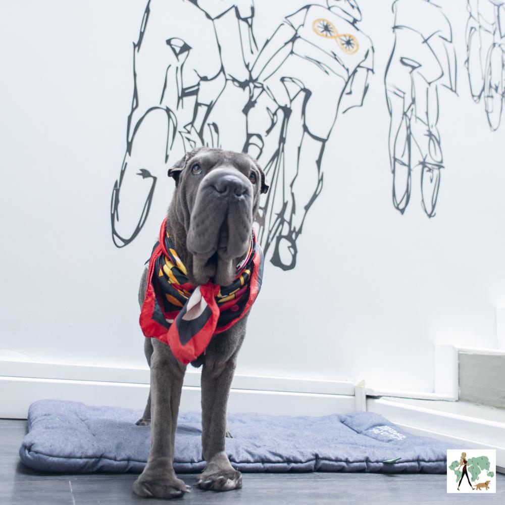 cachorro de pé com parede desenhada ao fundo