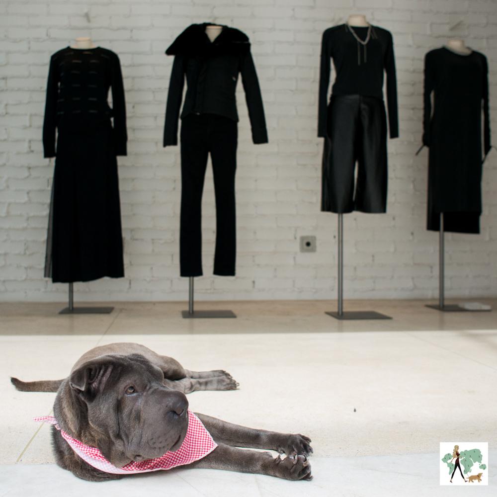 cachorrodeitado com manequins vestidos de roupas femininas atrás