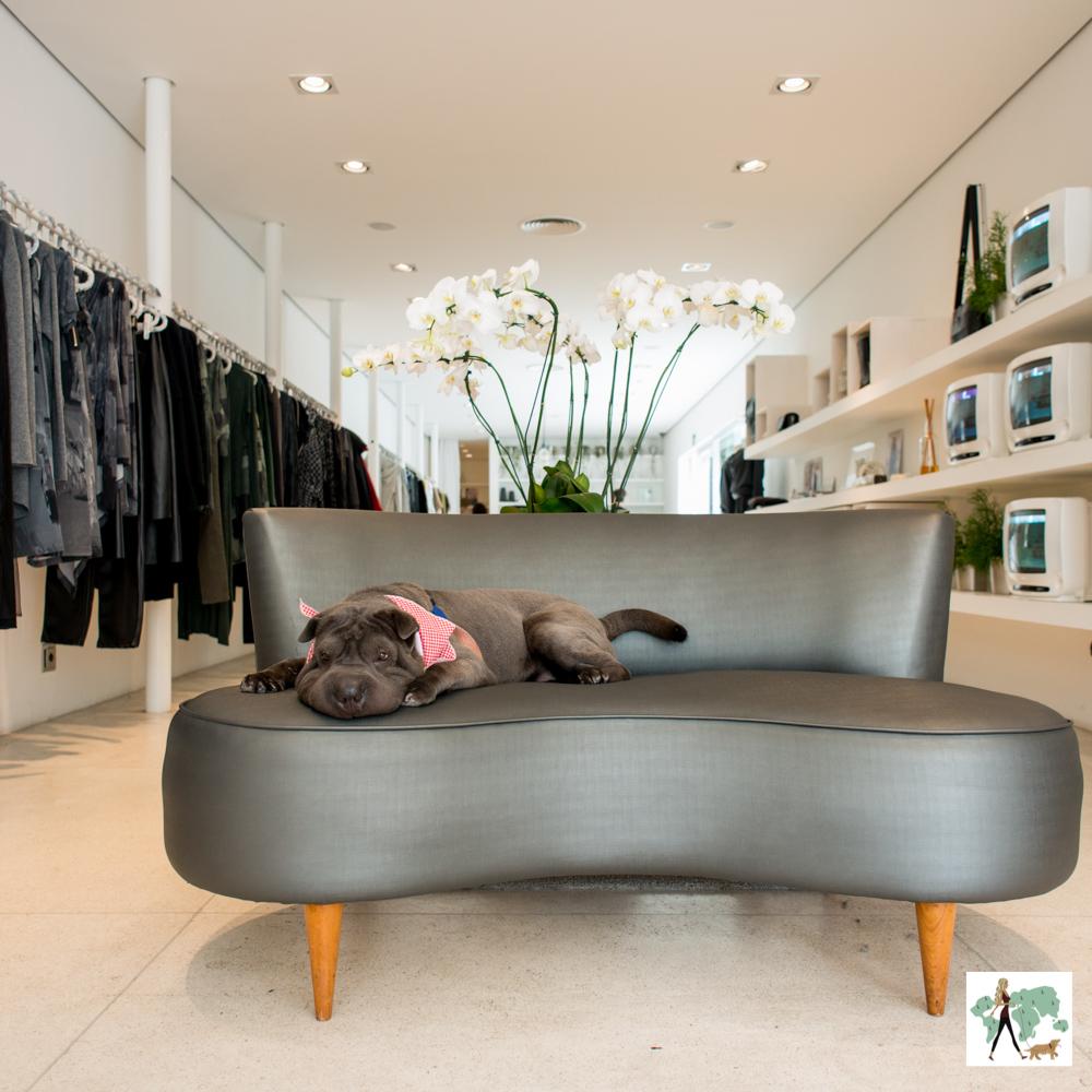 cachorro deitado em cima de sofá em loja feminina