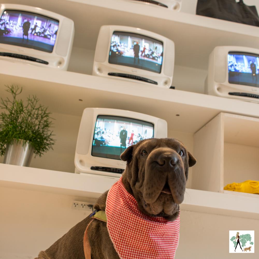 cachorro na frente de televisões expostas em prateleiras