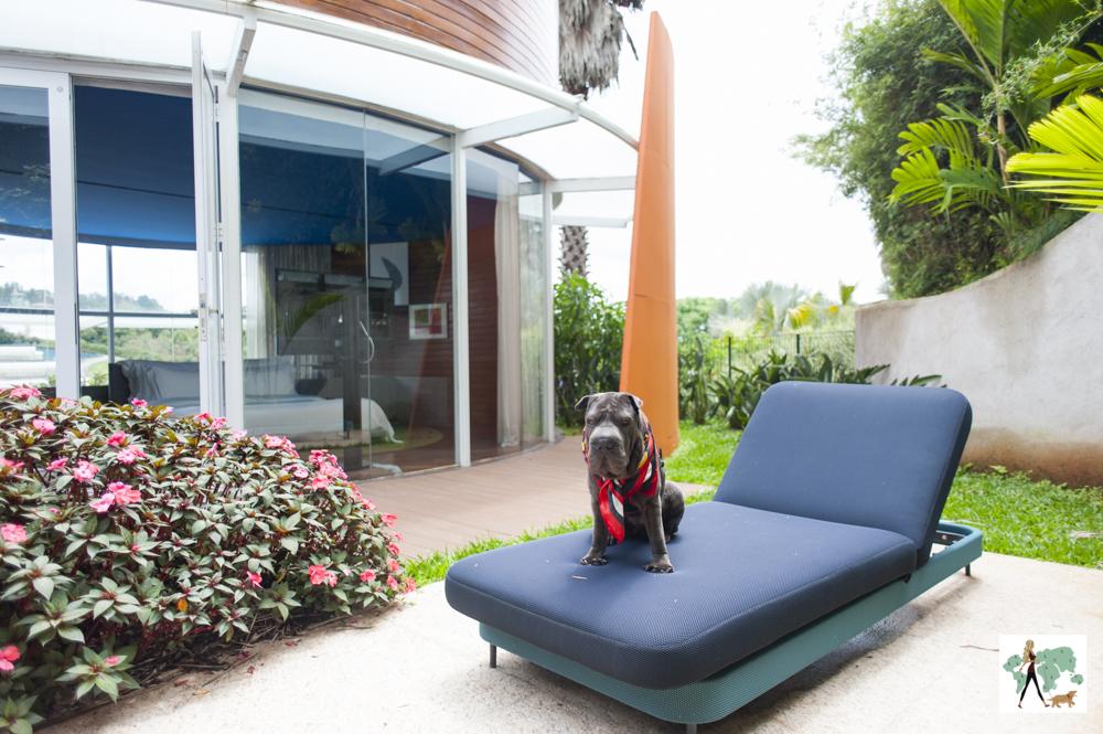 cachorro sentado em cima de espreguiçadeira em jardim interno
