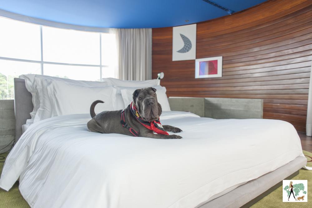 cachorro deitado em cima de cama de hotel