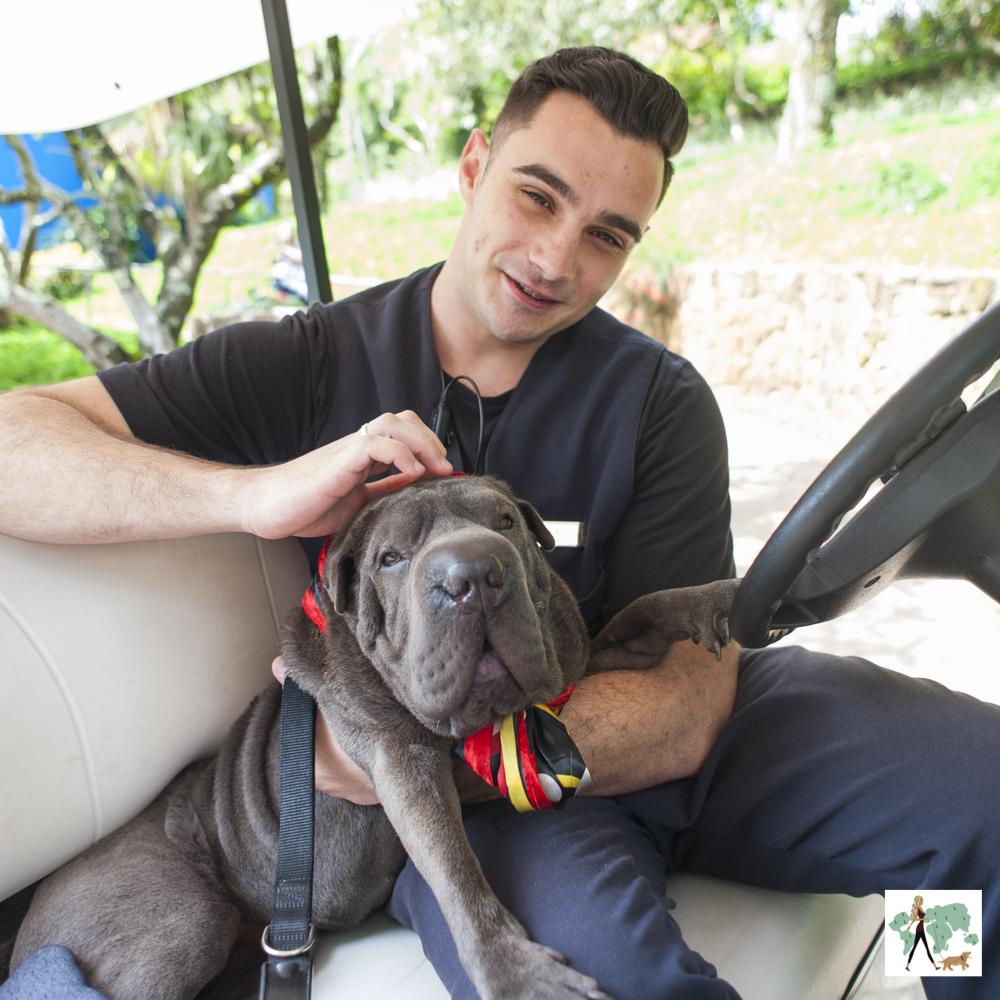cachorro com homem em carrinho de golfe