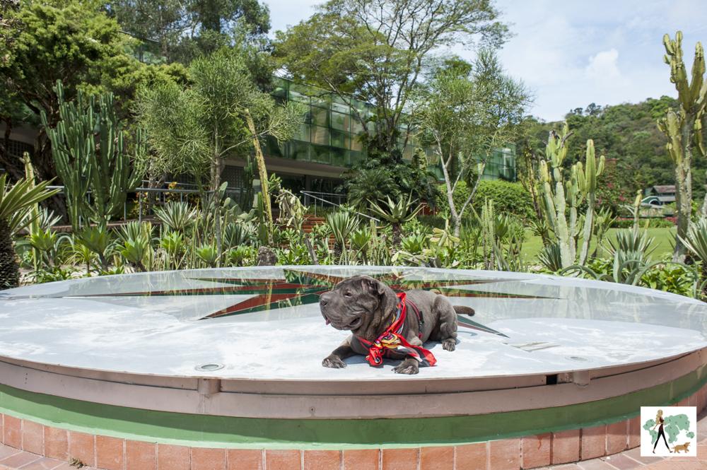 cachorro deitado em cima de símbolo da Rosa dos Ventos