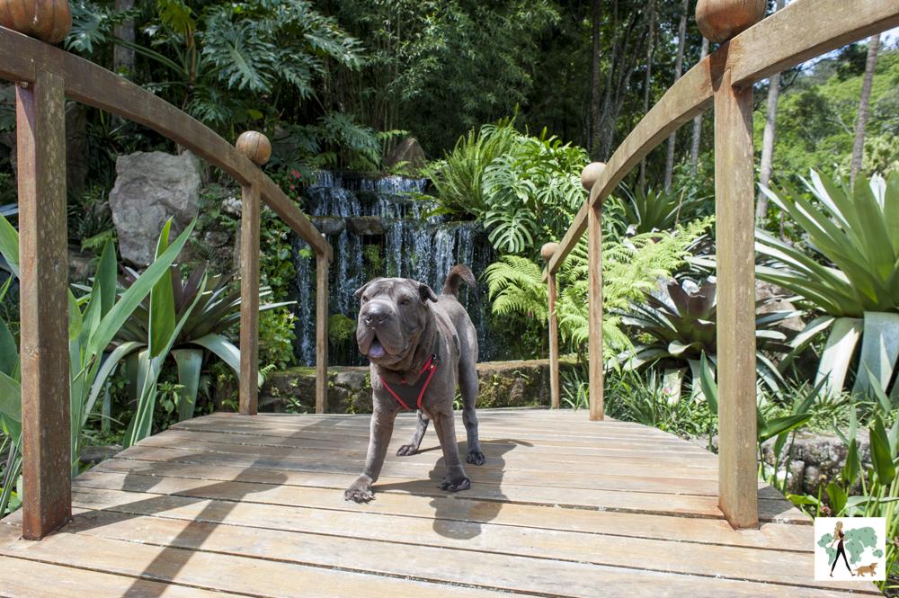 cachorro em cima de ponte de madeira com cachoeira ao fundo