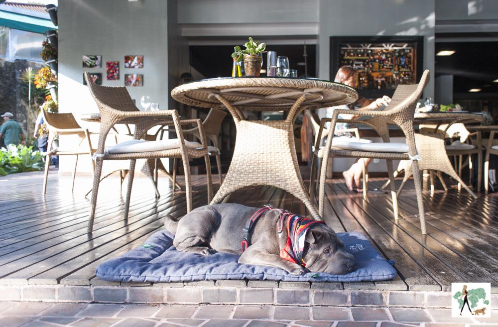 cachorro deitado em cima de almofada ao lado de mesa com cadeiras