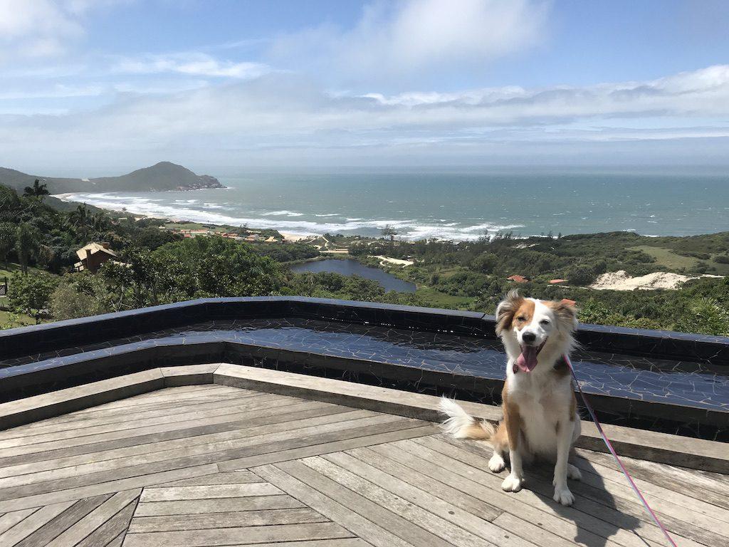 cachorro sentado em deck com vista para Praia do Rosa