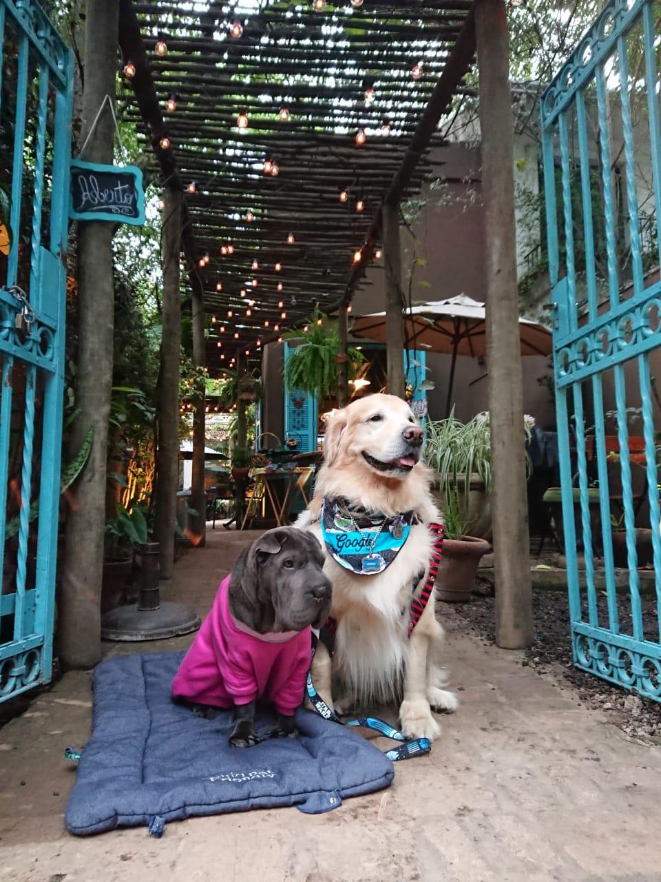 cachorros sentados na frente de restaurante