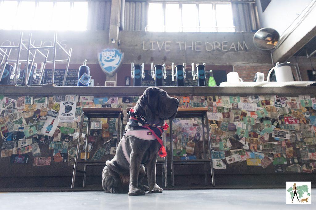 cachorro sentado em frente ao balcão de bar