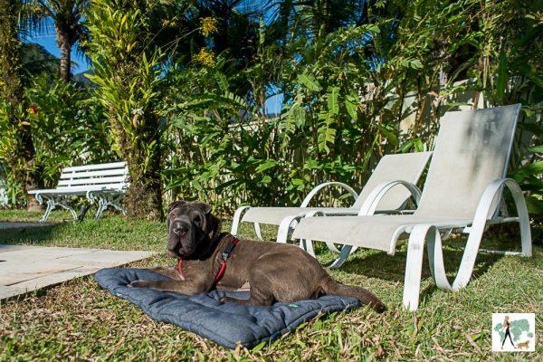 cachorro deitado no jardim em frente as espreguiçadeira