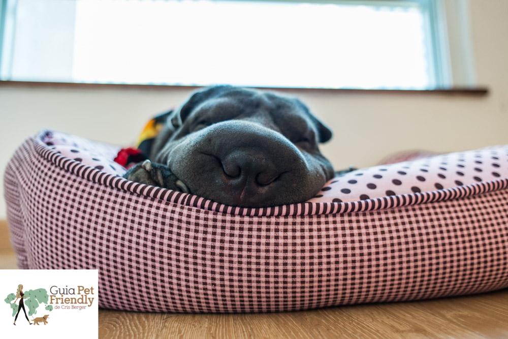 cachorro com bochecha grande deitado em caminha