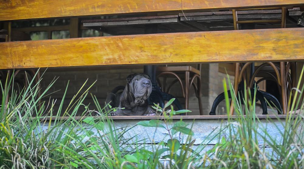 cachorro deitado próximos das plantas