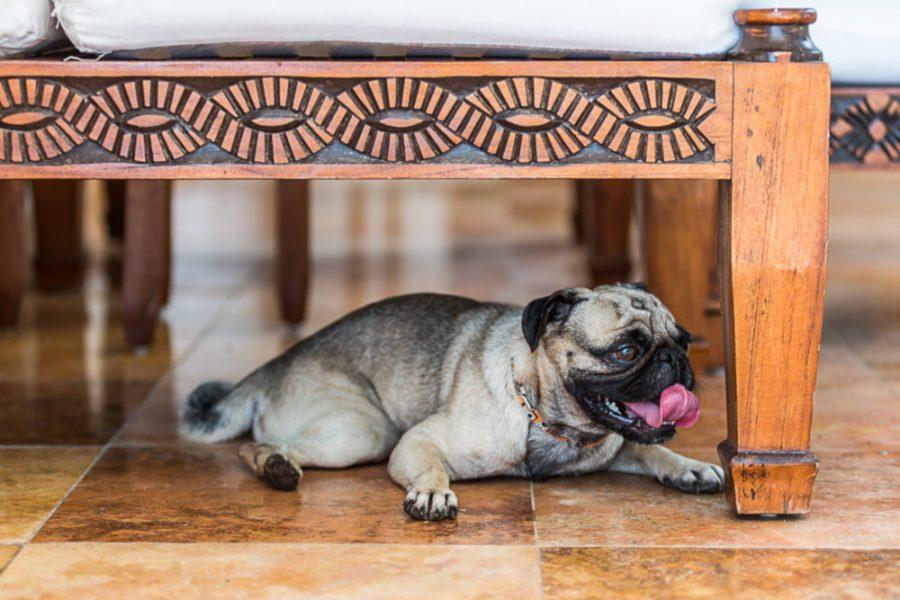 cachorro deitado debaixo da cama