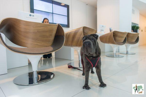 cachorro em pé ao lado das cadeiras