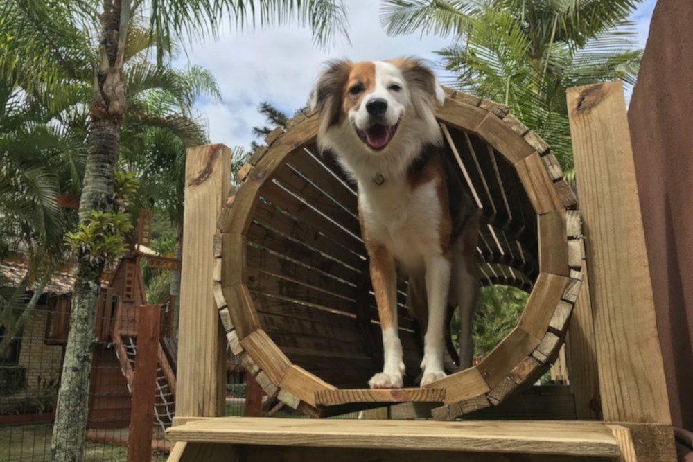 cachorro brincando no parque