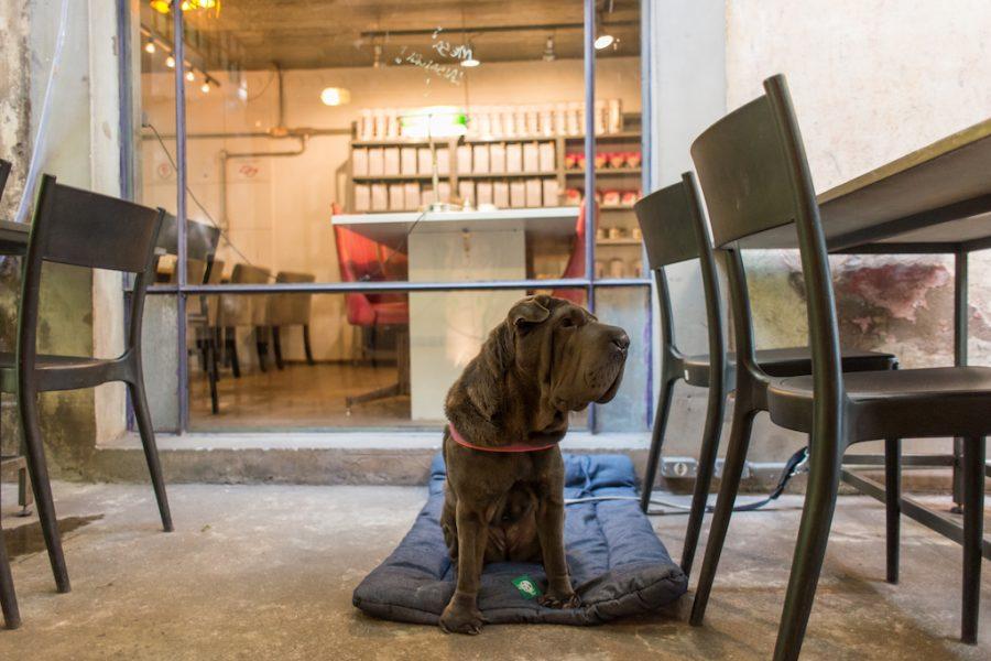 cachorro sentado no chão ao lado de mesas e cadeiras