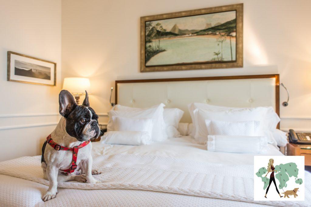 cachorro em cima da mesa de quarto de hotel