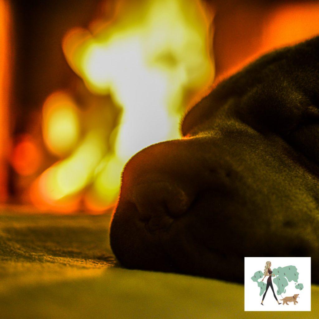 rosto de cachorro e fogo de lareira ao fundo