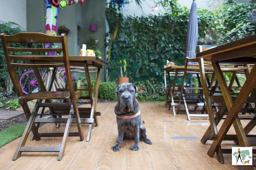 cachorro sentado no chão entre as mesas de restaurante