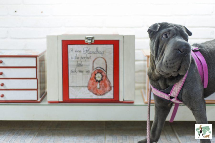 cachorro na frente de armário com frases