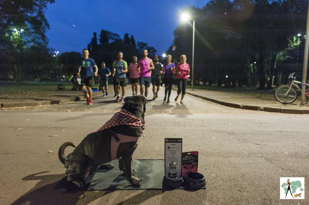 cachorro olhando para pessoas correndo no parque