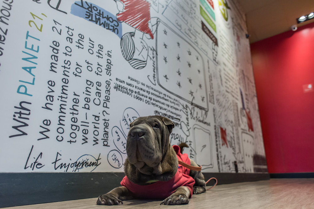 cachorro deitado com parede desenhada atrás