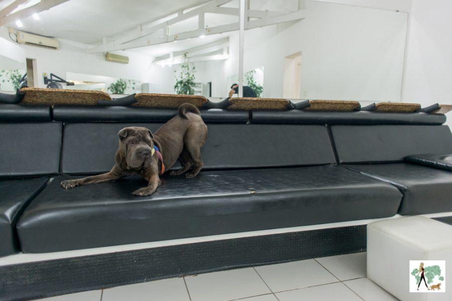 cachorro no sofá do salão de beleza