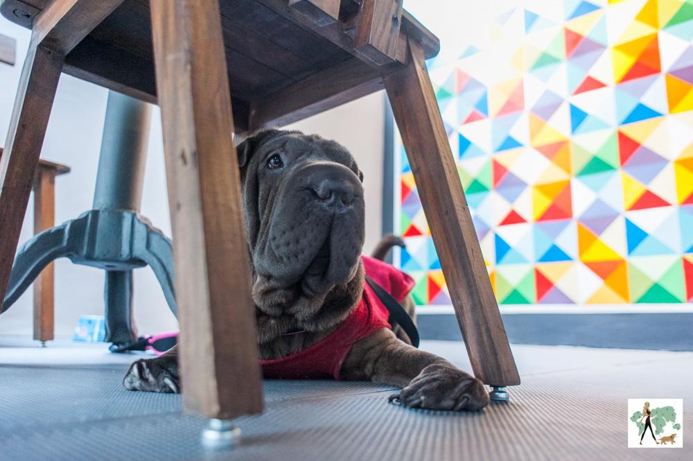 cachorro deitado debaixo da cadeira