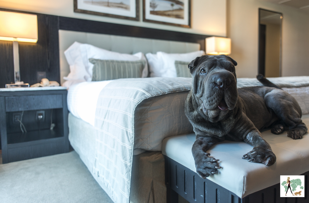 cachorro em cima de banco no pé da cama de hotel