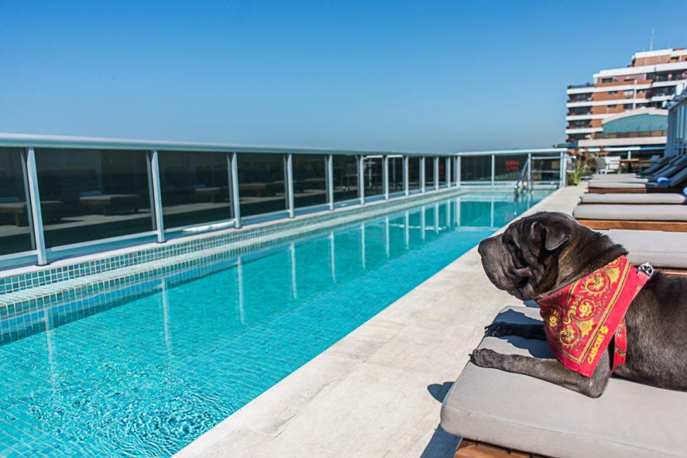 cachorro deitado na espreguiçadeira de frente para a piscina
