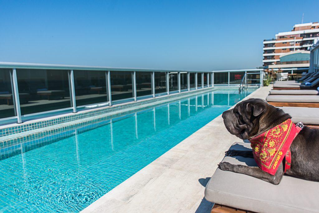 cachorro em cima de espreguiçadeira na frente da piscina