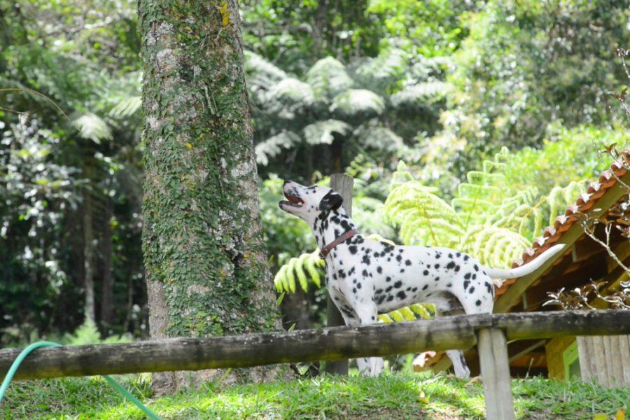 cachorro no jardim olhando para árvore
