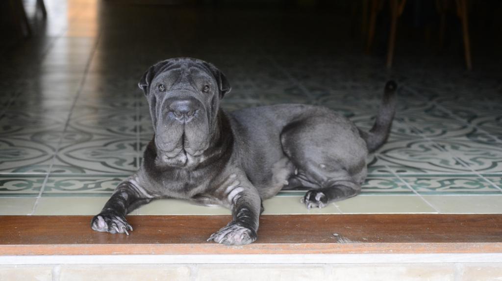 cachorro sentado em hotel pet friendly