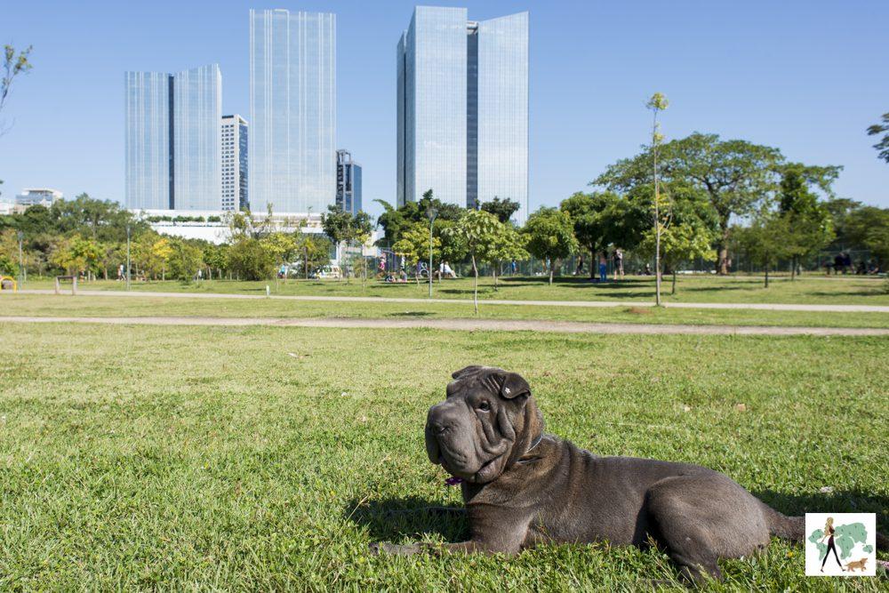 cachorro deitado no jardim do parque