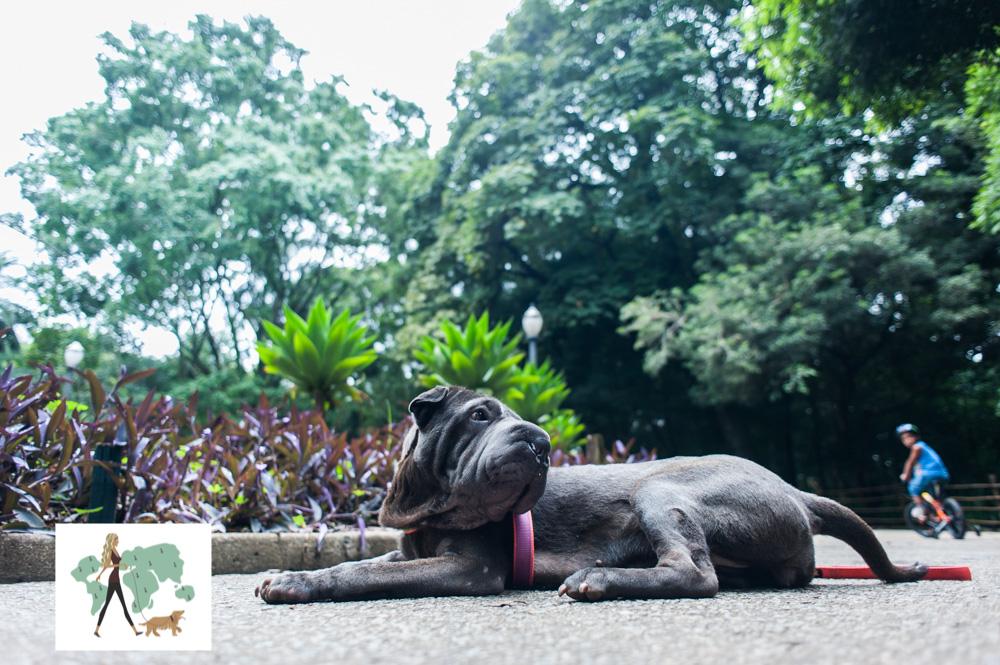 cachorro deitado no chão do parque