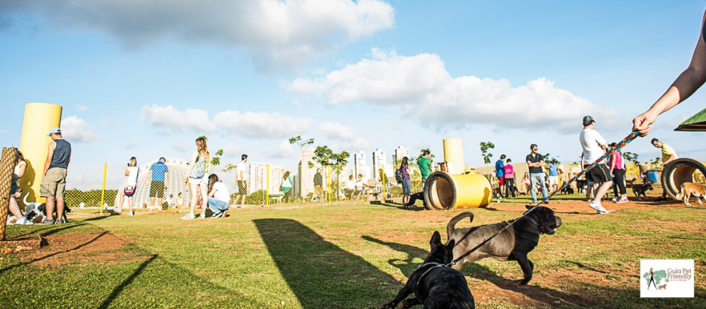 cachorro na guia brincando no parque
