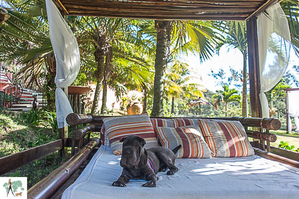 cachorro deitado em lounge em hotel