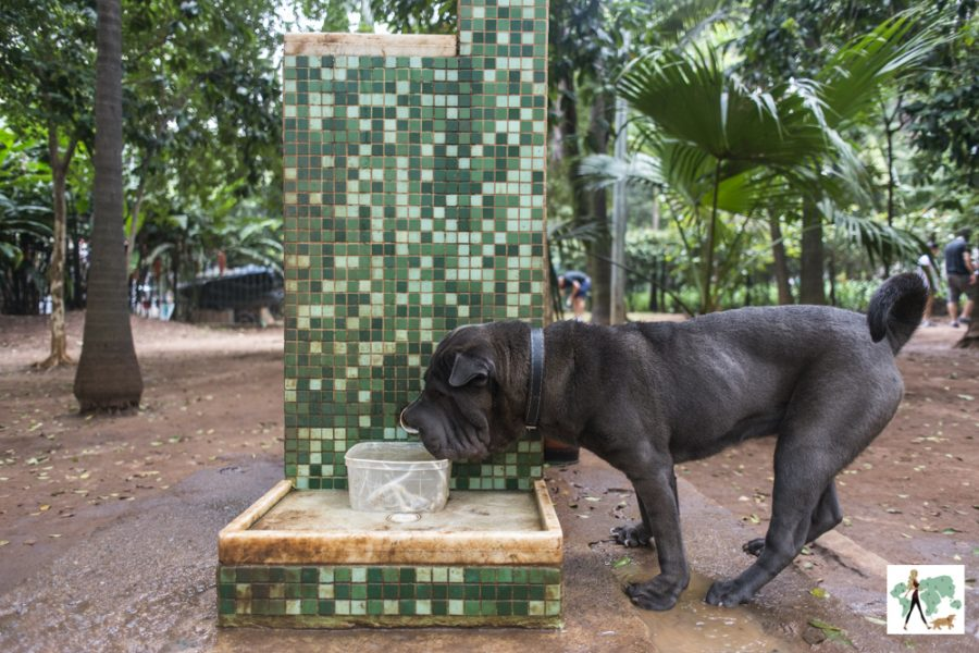 cachorro bebendo água na praça