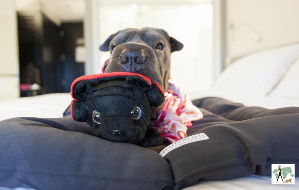 cachorro deitado na cama com ursinho na boca