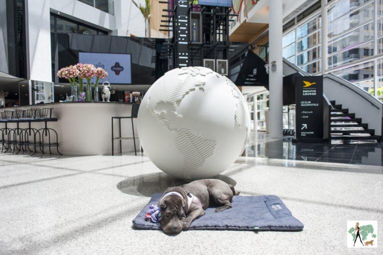 cachorro deitado no chão da sala na frente do globo do planeta